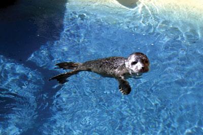 FAQs - IMATA - International Marine Animal Trainers Association