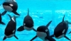 The Use of Data to Track and Adjust the Socialization of Killer Whales <em>(Orcinus orca)</em>