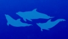 Behavioral Approximations for Improving Social Compatibility in an All-Male Dolphin <em>(Tursiops truncatus)<em> Social Group