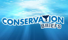Conservation Briefs